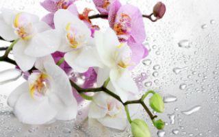 Может ли орхидея вызвать аллергию