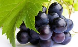 Виноград аллерген или нет
