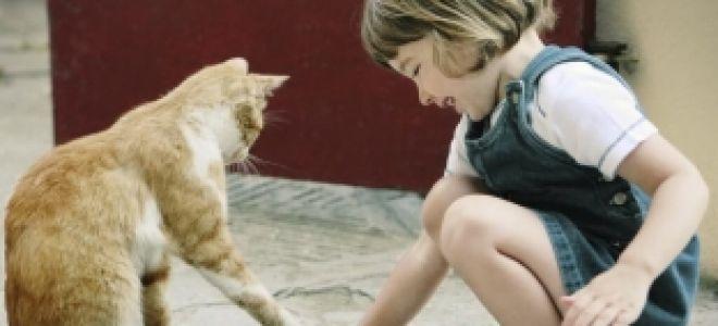 Аллергия на кошачью мочу