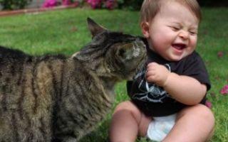 Аллергия на животных у грудничков