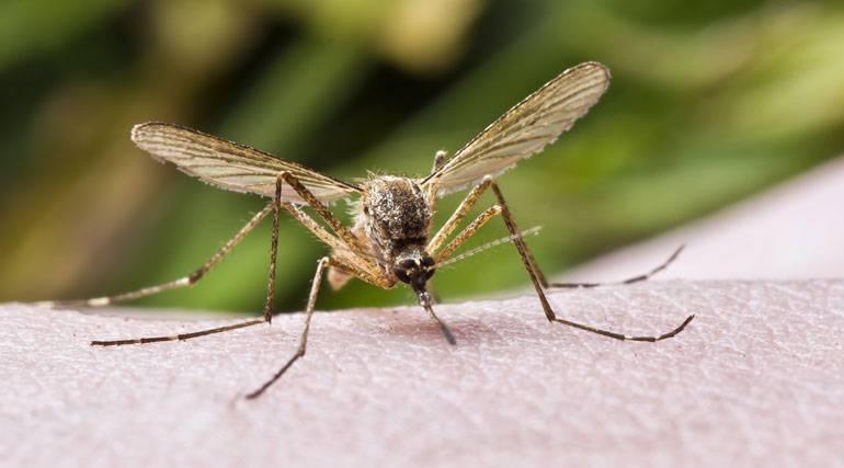 аллергия на укусы комаров у детей лечение