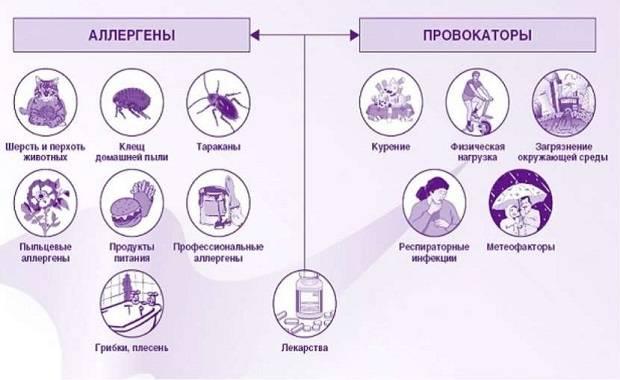 Аллергены и их влияние