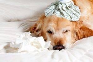 Почему появляется аллергия у собак