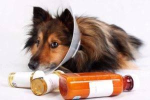Чем лечить аллергию у собак