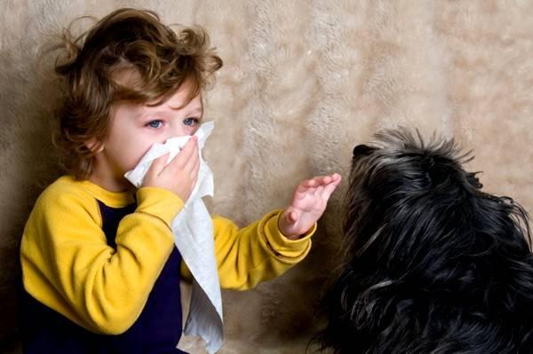 Шерсть животных может быть причиной аллергии