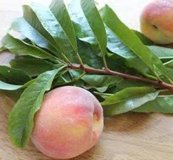 Листья персикового дерева