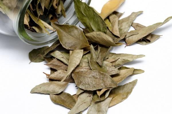 лавровый сухой лист