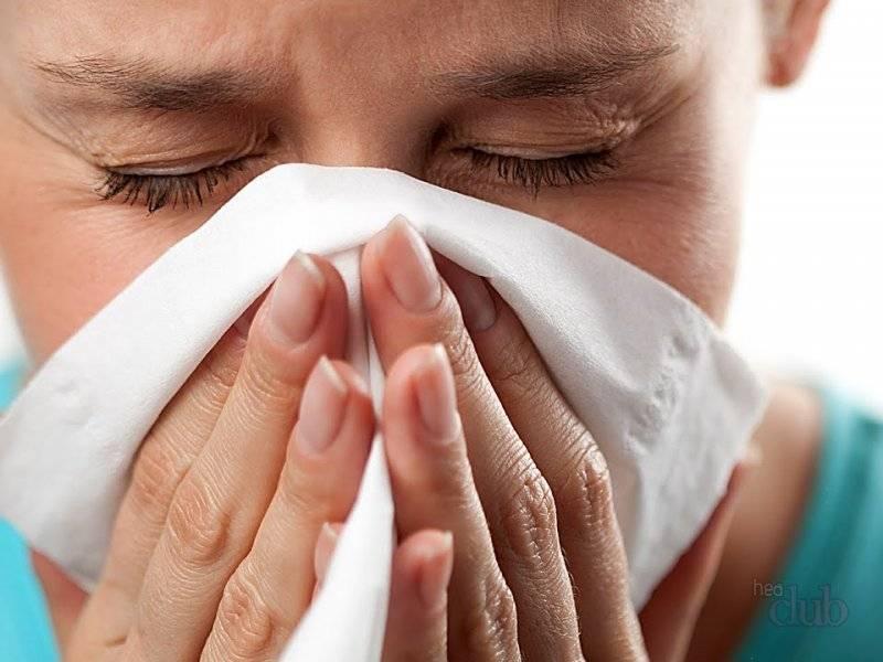 Аллергию может вызвать не только шерсть животных
