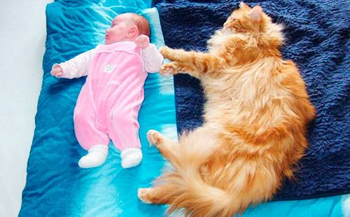 Малыш спит возле кота