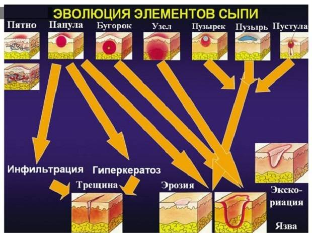 Эволюция элементов