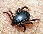 Таблетки от укусов насекомых — Аллергия