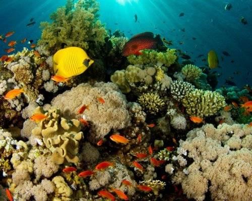 Аллергия на морскую воду фото
