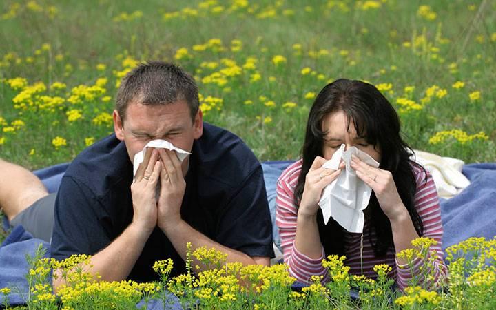Аллергия на пыльцу полевых цветков