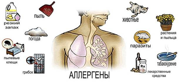 Различные виды аллергенов