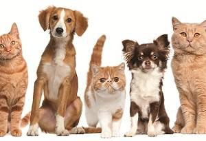 аллергия на шерсть собаки