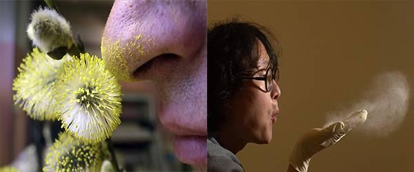 пыльца и пыль как причины аллергии