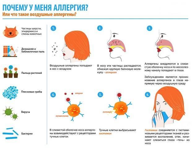 Причины аллергии у человека