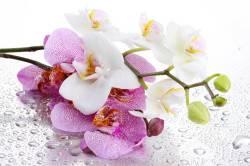 Пыльца орхидеи - причина аллергии