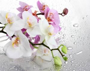 Аллергия и орхидеи