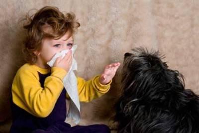 Аллергия на животных