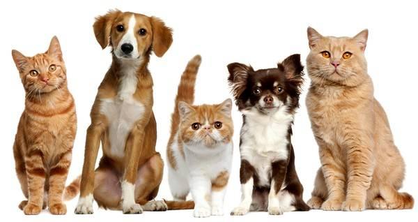Шерсть животных является одним из аллергенов