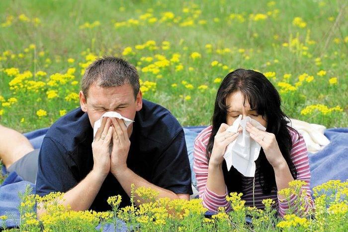 Как лечить аллергию на пыльцу