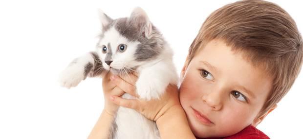 Изображение Аллергия на животных у детей на Schoolofcare.ru!