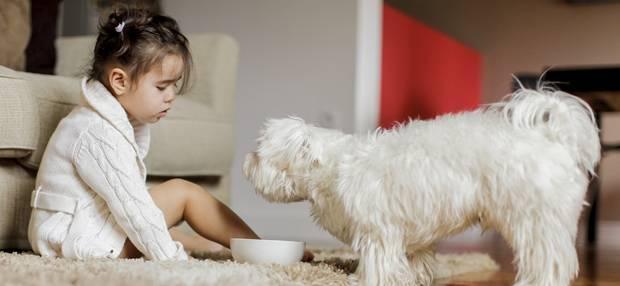 Аллергия на животных может пройти через 2-3 недели после того, как вы его принесли домой