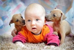 Как избежать аллергии на животных у ребенка