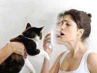 аллергия на кошек