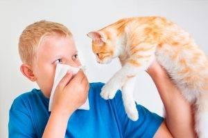 Аллергия на шерсть животных почему