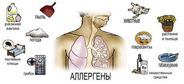 allergiya-vozbuditeli