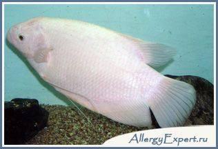 бывает ли аллергия на рыбу