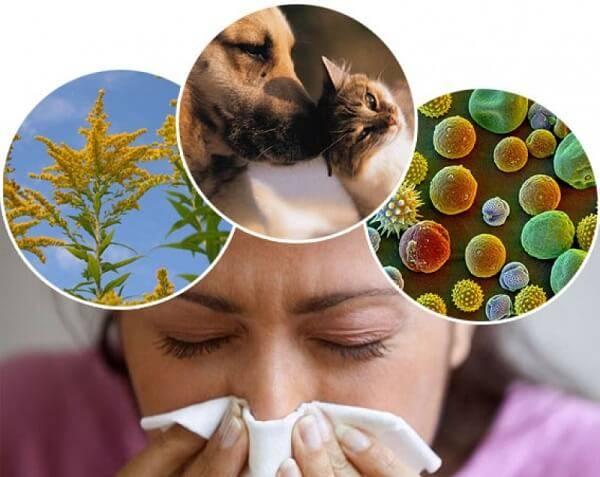 Аллергия и её виды