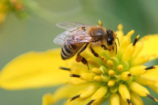 аллергия на цветение при беременности чем лечить