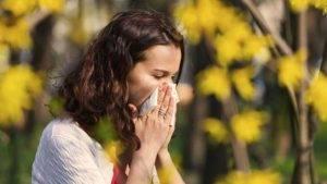 Чихание при аллергии на амброзию