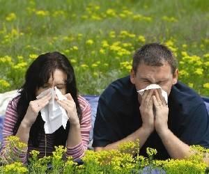 препараты от аллергии на амброзию