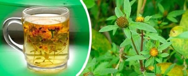 Чай череды от аллергии