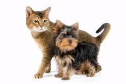 Шерсть животных - причина аллергии на ушах