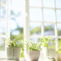 Невероятно чистое и светлое окно с полезными растениями на подоконнике