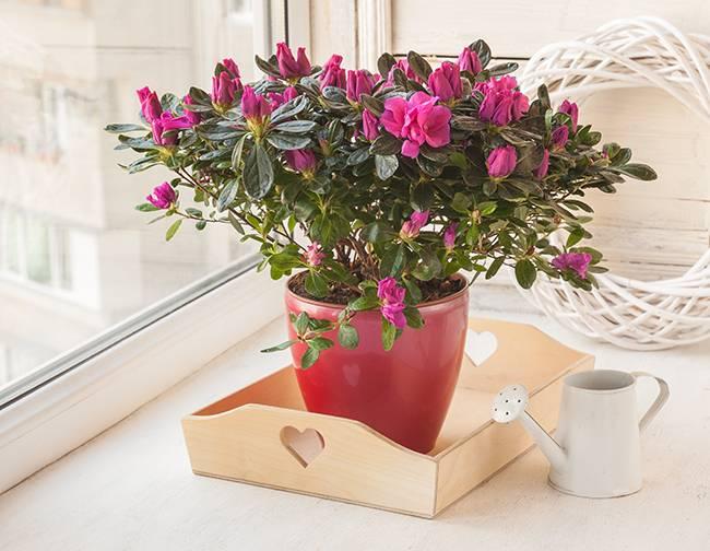 Аллергия на комнатные цветы, фото