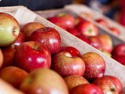 Яблоки на прилавке
