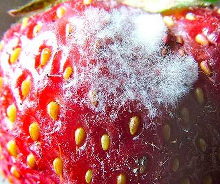 Аллергия на яблочное пюре у грудничка фото