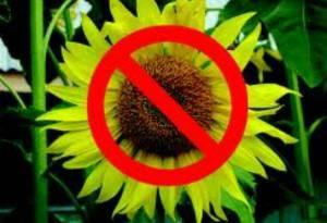 Аллергия на семена льна - Симптомы и лечение болезней