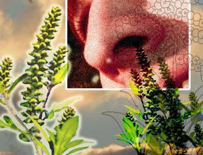 средства от аллергии на цветение