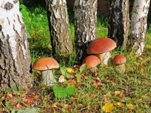 Симптомы аллергии на грибы