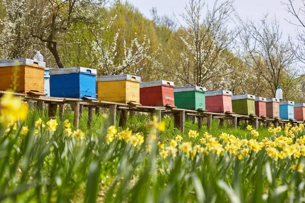 аллергия на укусы пчел фото