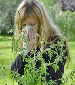 Аллергия на амброзию