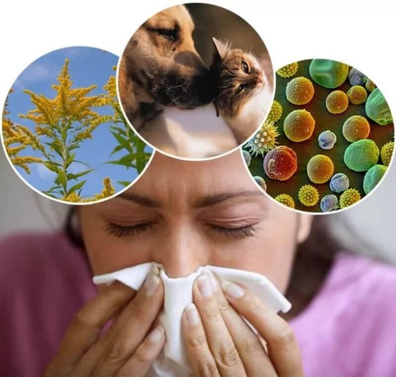 Лечим аллергию
