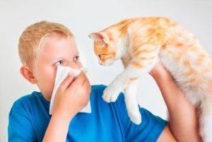 Алергия на животных у ребенка
